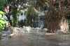 Lahaina -- Pioneer Inn Courtyard