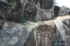 Petrified Forest State Park -- Petroglyphs
