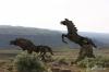 Wild Horses Monument