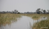 Passage through the Okavango Delta