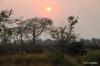 Dawn & elephants, Okavango Delta