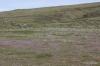 Yakima Rim Skyline Trail -- Wildflowers