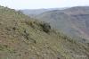 Rim Skyline Trail -- Yakima Canyon