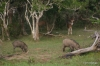 Yala National Park -- Boar & Deer
