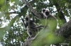 Yala National Park -- Monkeys