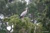 Yala National Park -- Stork