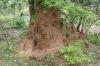 Yala National Park -- Termite mound