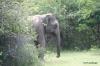 yala-national-park-2004-034