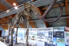 Yukon Beringia Center, Whitehorse