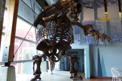 Yukon Beringia Center, Whitehorse.  Jefferson's Ground Sloth