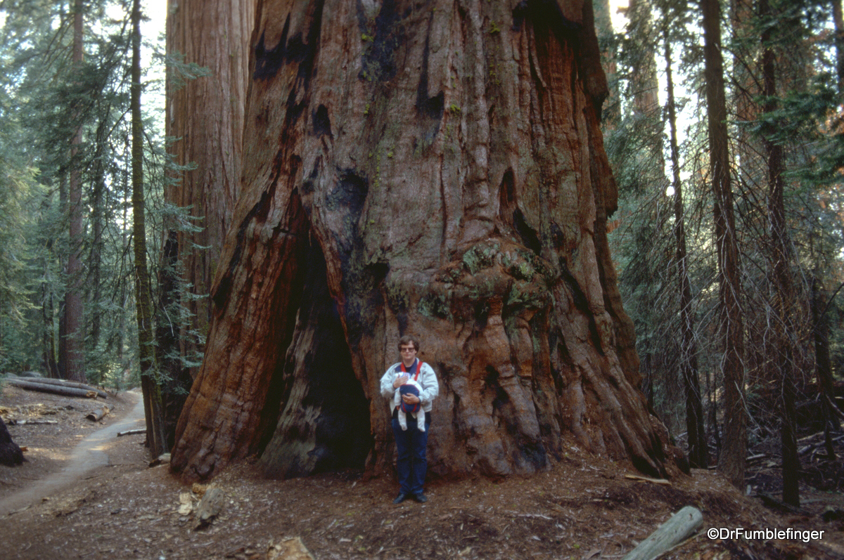 A young DrFumblefinger with his oldest son provide size perspective to the massive Sequoia