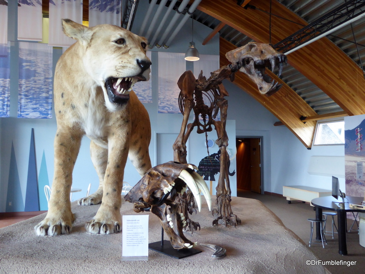 Yukon Beringia Center, Whitehorse. American Scimitar Cat