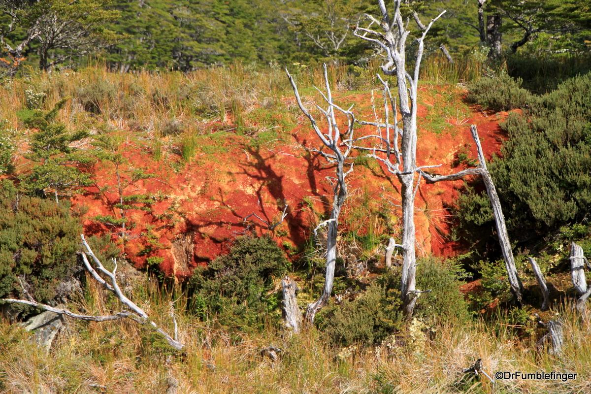 Colorful lichens growing in Tierra del Fueg0