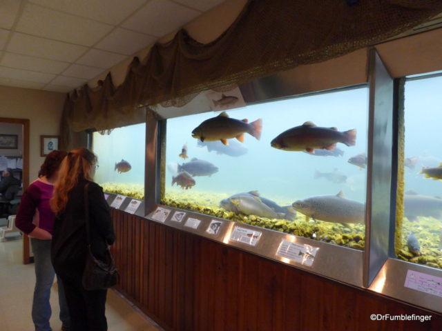 Viewing tank, Shepherd of the Hills Fish Hatchery