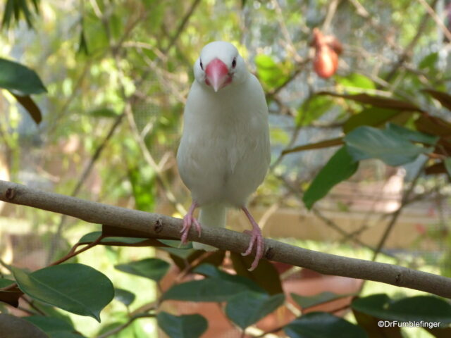 There are many tropical birds in Butterfly World